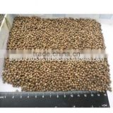 high quality delicious healthy Coriander seeds
