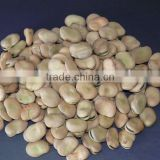Dry Broad bean