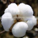 Certified BCI cotton