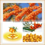 natural sea buckthorn extract/high quality sea buckthorn extract/sea buckthorn berry extract