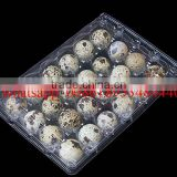 24 Holes rectangular clear transparent plastic quail egg cartons, plastic quail packing tray 24eggs