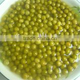 supply canned green peas with dry & fresh materials good quality