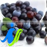 Acai Berry Extract Powder as a weight loss product takes the nutrition industry by storm