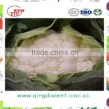 CHINESE Organic green vegetables fresh cauliflower from Shandong Province