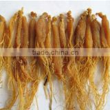 Fresh Red Ginseng Root, High Premium Panax Ginseng