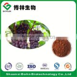 100% Nature High Orac Value Grape Seed Extract Powder High OPC High Polyphenol Vitis vinifera L.