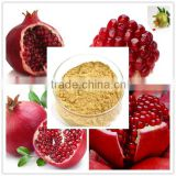 Organic 100% Natural high quality with Best Price 40% Ellagic Acid Pomegranate Peel Extract (HPLC)