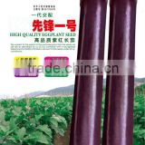 Super High Yield Hybrid Black Purple Long Eggplant Seeds For Sale-pioneer No.1