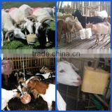 Factory supply Farm use cow sheep salt mineral licking block press machine