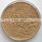 Pure natural chinese herb medicine Angelicae extract 1% ligusiilide Angelicae root powder