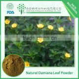 Best Quality 100% Natural Damiana Extract/ Damiana Leaf Extract Powder 50:1