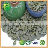 cashew nut Pumpkin Seeds kernels GWS new crop