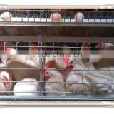 Focus industry poultry farm automatic layer chicken battery cage with automatic egg collection system