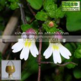 No Any Additives 4:1 euphrasia officinalis extract by HPLC