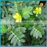 Tribulus Terrestris Extract Powder For Sale