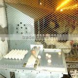 Automatic nest system/auto nest system/Poultry equipment/egg picking system/chicken nest/Manual egg collection box
