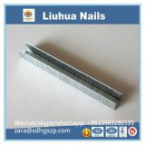 professional manufacturer of LIUHUA brand staples & brad nails