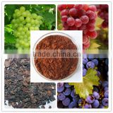 organic grape seed extract powder/grape seed oil extraction plant/grape seed extract 95% proanthocyanidins