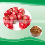 healthcare product hawthorn berry extract