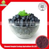 Health-Care Product Acai Berry Extract Powder Wholesale by ISO China Supplier