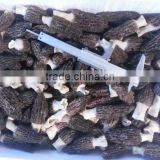 Chinese Morel Mushroom/ Dried Morel/ Morchella Conica