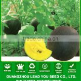 W21 Xiaoyu no.7 f1 hybrid watermelon seeds, black skin, yellow flesh, 2 to 3kgs in weight, 12% brix
