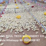 Ghana Poultry Farm Deep Litter System & Broiler Floor Raising System with Automatic Nipple Drinker System & Feeding Pan System in Chicken Shed