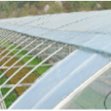 Roof Opening Plastic Film Greenhouse for Agriculture