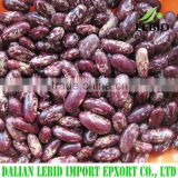 Good price of purple speckled kidney beans