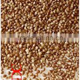 roasted buckwheat brown colour sweet seed