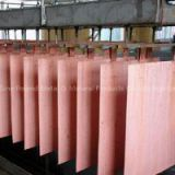 Copper Cathodes, Copper Plates, Copper Sheets, Copper Coils, Copper Ingots, Copper Scraps.