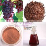 Grape seed extract powder 95% Proanthocyanidins