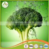 2016 new crop chinese fresh broccoli