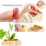 promotional magic message bean seeds with words