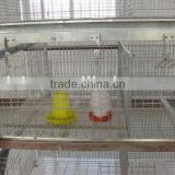 automatic poultry farming equipment-pullet rear cage