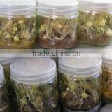 Tissue culture vessels jar & Tissue culture glass jar with plastic cap