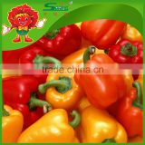 orange red capsicum yellow capsicum