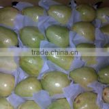 fresh egyptian white guava