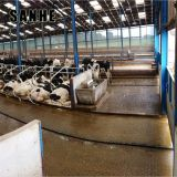 steel structure dairy farm shed / steel structure cow dairy farm