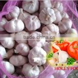 3.5kg mesh bag white pure white fresh garlic ASEAN southest asia middle east Arabic Pakistan 5.0 5.5 6.0 cm