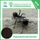 Pharmaceutical grade Anti-aging product polyrhachis ant extract, polyrhachis ant powder with competitive price