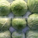 High Quality Fresh Cabbages