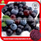 High Quality and Promotion Price Acai Berry Extract Powder Bulk with 10-20g Free Sample Supplied by ISO Manufacture