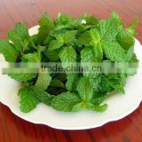 Menthol Crystal with Bulk Quantity and Best Price