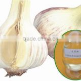 Garlic Oil Bulk
