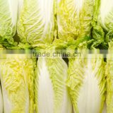 Long Shape Cabbage Fresh Green Cabbage on sale frozen packed