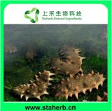 Holothurin; Sea cucumber extract ; Animal extract ; Animal protein