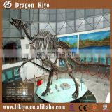Outdoor and museum replica model dinosaur skeleton