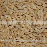 Best BARLEY from UKRAINE