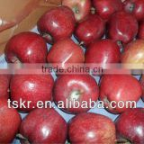 fresh fruit importers red huaniu apple from china